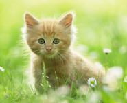 Из рода кошачьих...