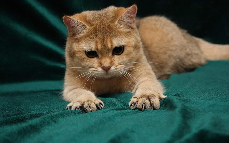 Из рода кошачьих
