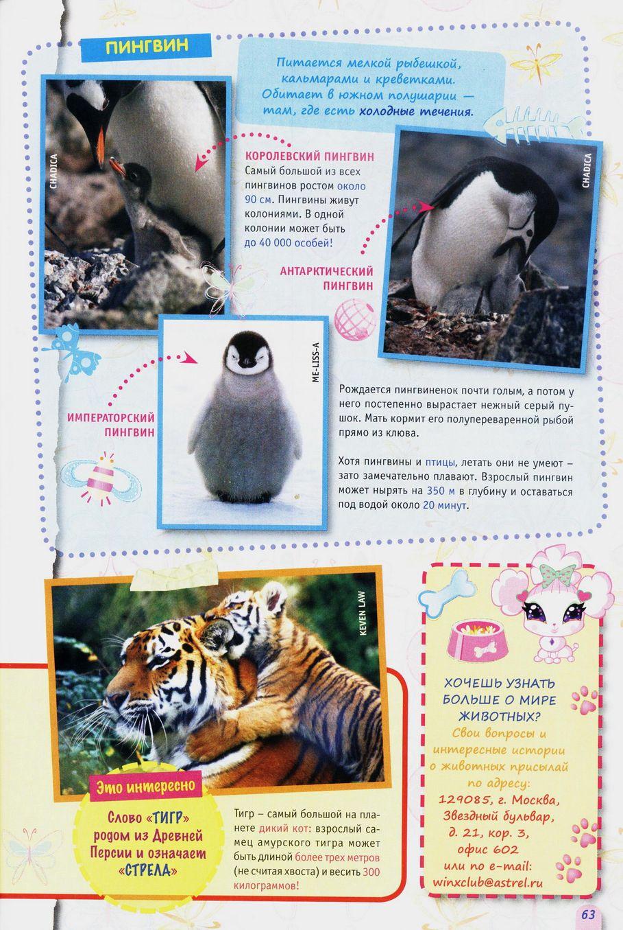 Комикс Винкс Winx - Месть моря (Журнал Винкс №4 2011) - стр. 63